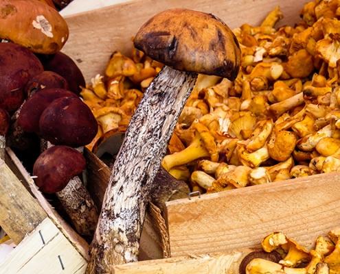 Frutti d'autunno I funghi
